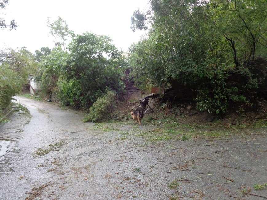 Ялта ликвидирует последствия урагана (ФОТО), фото-4