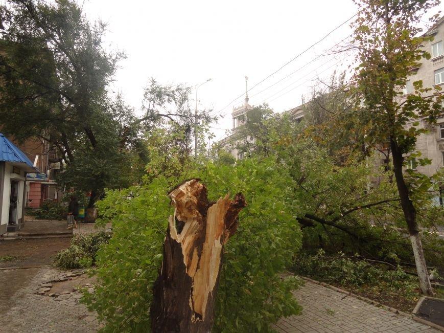 Волонтеры помогают убирать деревья на улицах Мариуполя (ФОТО), фото-2