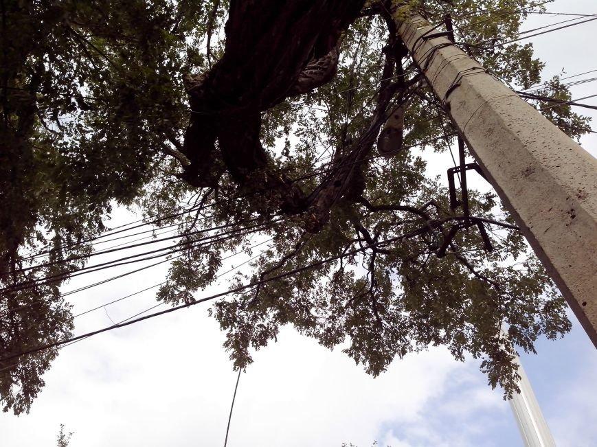 Возле мариупольской школы на проводах висит дерево (ФОТО), фото-2