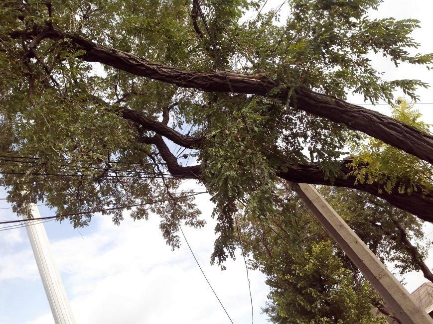 Возле мариупольской школы на проводах висит дерево (ФОТО), фото-3