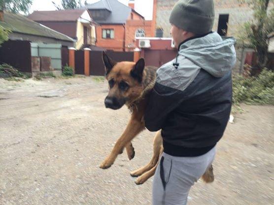 Во время шторма на базе «Азова» в Урзуфе пострадала овчарка, фото-1