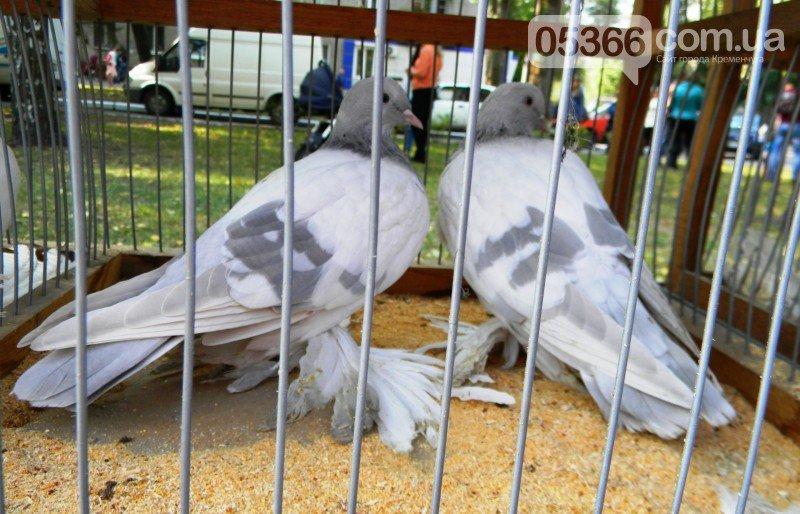 В Кременчуге прошла выставка птиц!   ФОТО, фото-7