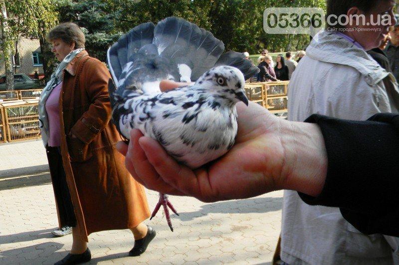 В Кременчуге прошла выставка птиц!   ФОТО, фото-8