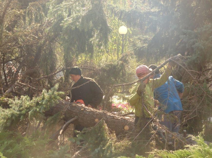 Знаменитые мариупольские 40-летние ели распилили (ФОТОРЕПОРТАЖ), фото-4
