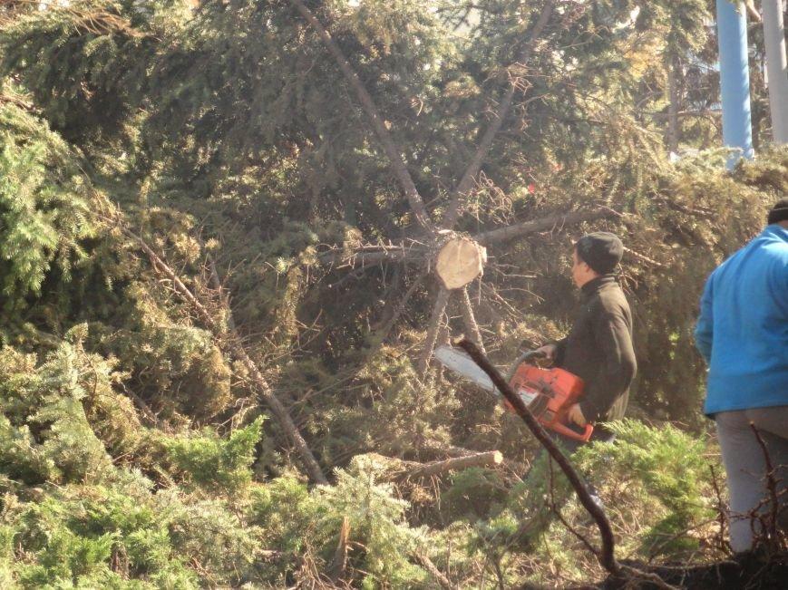 Знаменитые мариупольские 40-летние ели распилили (ФОТОРЕПОРТАЖ), фото-6