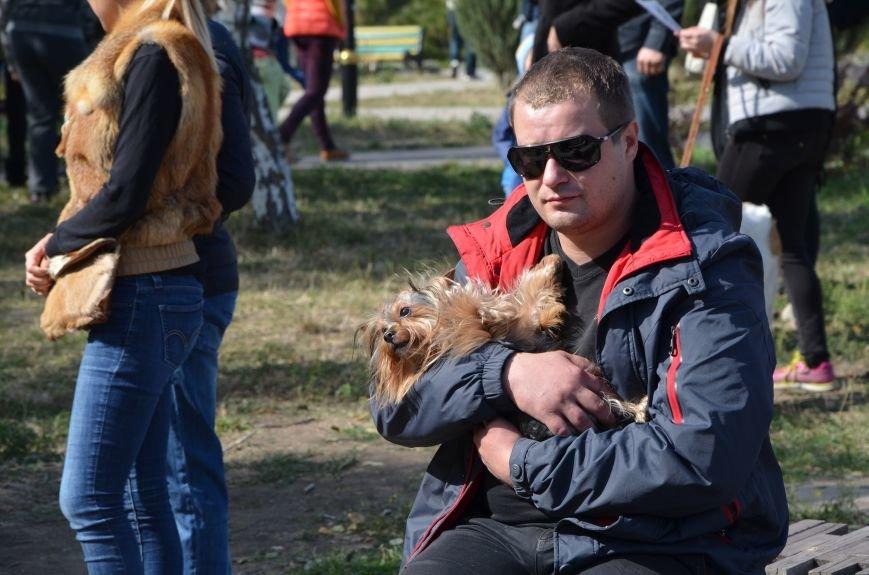 В Мариуполе прошла выставка собак (ФОТОРЕПОРТАЖ), фото-16