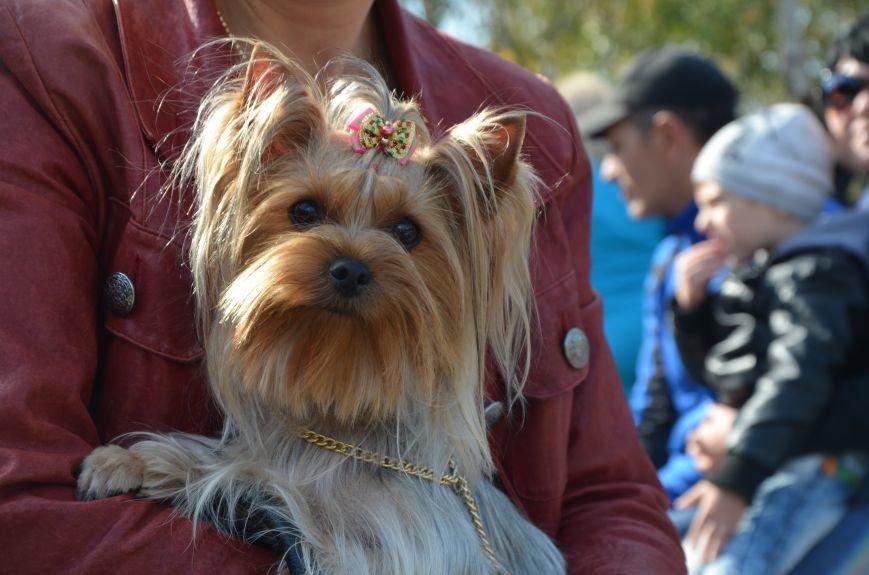 В Мариуполе прошла выставка собак (ФОТОРЕПОРТАЖ), фото-34