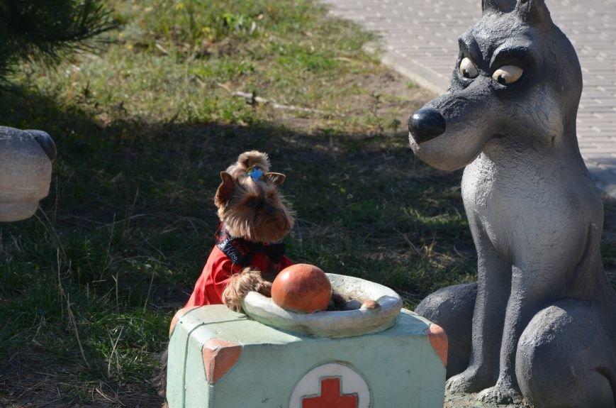В Мариуполе прошла выставка собак (ФОТОРЕПОРТАЖ), фото-3