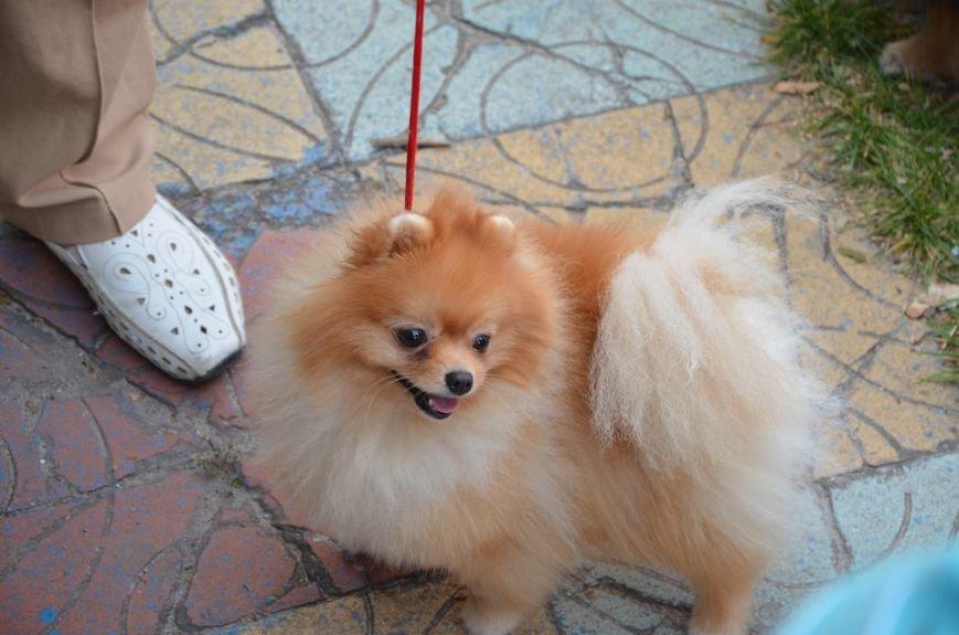 В Мариуполе прошла выставка собак (ФОТОРЕПОРТАЖ), фото-15