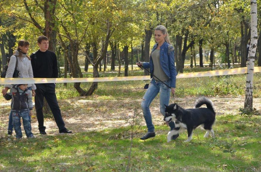 В Мариуполе прошла выставка собак (ФОТОРЕПОРТАЖ), фото-24