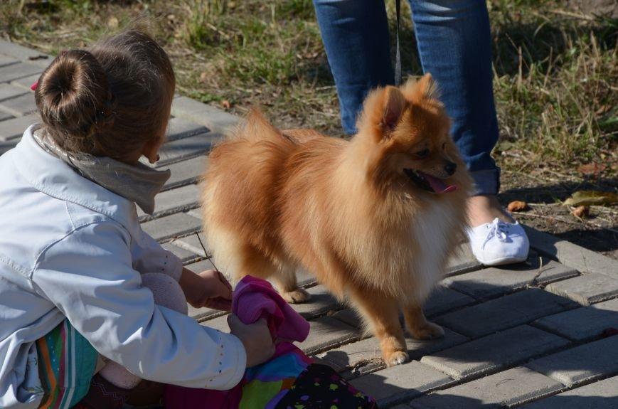 В Мариуполе прошла выставка собак (ФОТОРЕПОРТАЖ), фото-4