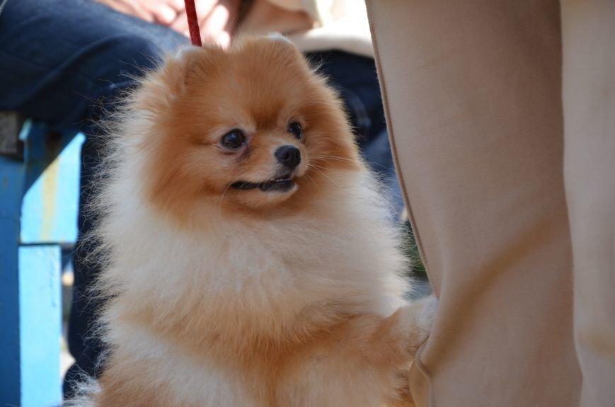 В Мариуполе прошла выставка собак (ФОТОРЕПОРТАЖ), фото-28