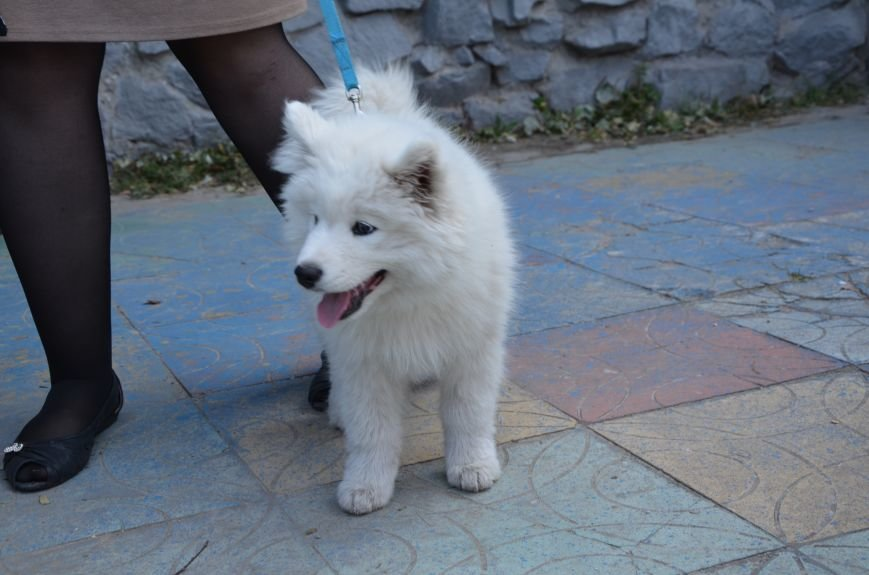 В Мариуполе прошла выставка собак (ФОТОРЕПОРТАЖ), фото-21