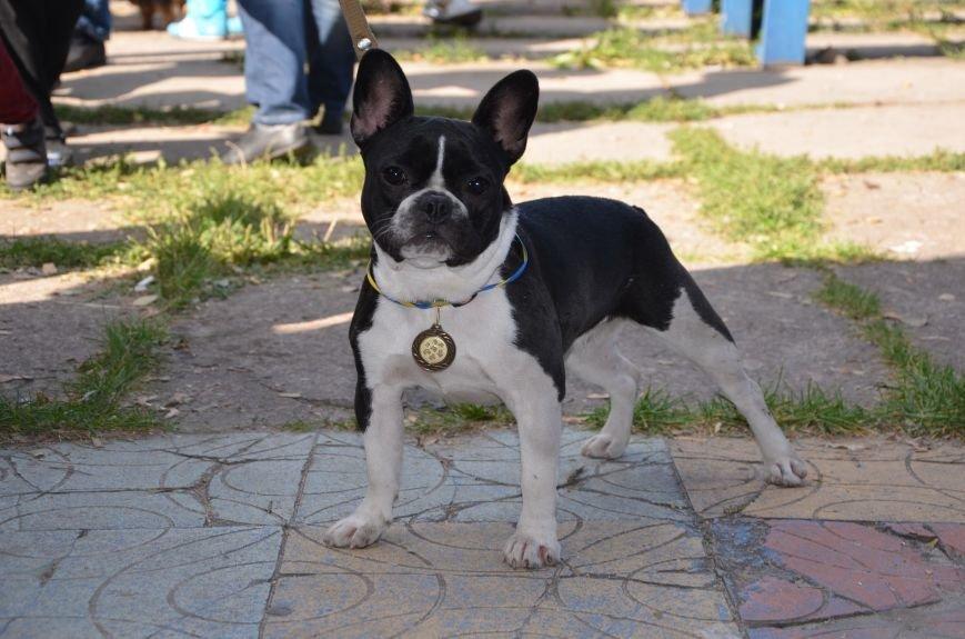В Мариуполе прошла выставка собак (ФОТОРЕПОРТАЖ), фото-20