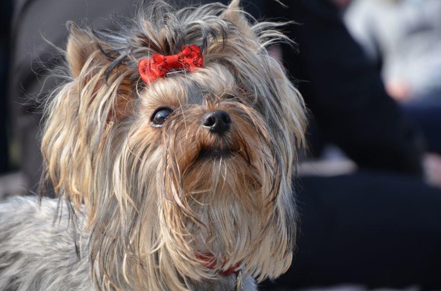 В Мариуполе прошла выставка собак (ФОТОРЕПОРТАЖ), фото-33