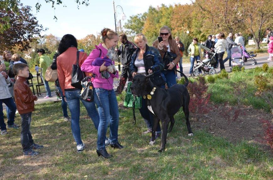 В Мариуполе прошла выставка собак (ФОТОРЕПОРТАЖ), фото-32