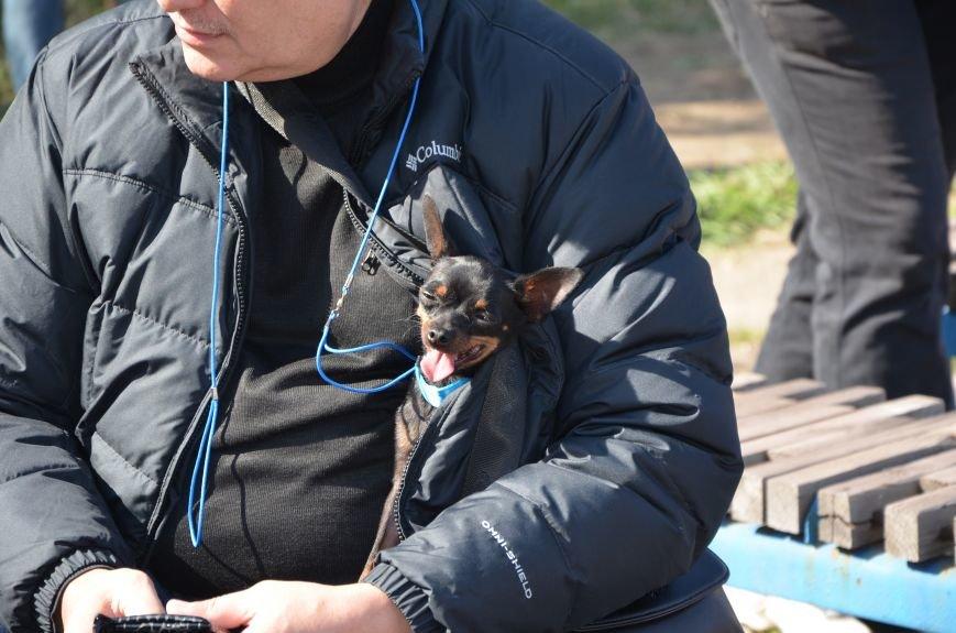 В Мариуполе прошла выставка собак (ФОТОРЕПОРТАЖ), фото-14