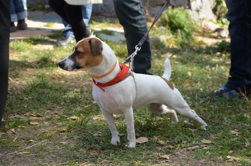 В Мариуполе прошла выставка собак (ФОТОРЕПОРТАЖ), фото-23