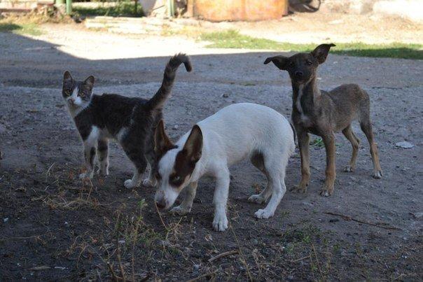 В Мариуполе волонтеры ищут меценатов для строительства приюта для животных, фото-3