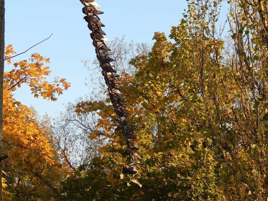 Киевские голуби приобщаются к спорту (ФОТОФАКТ), фото-5