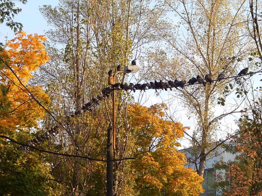 Киевские голуби приобщаются к спорту (ФОТОФАКТ), фото-6