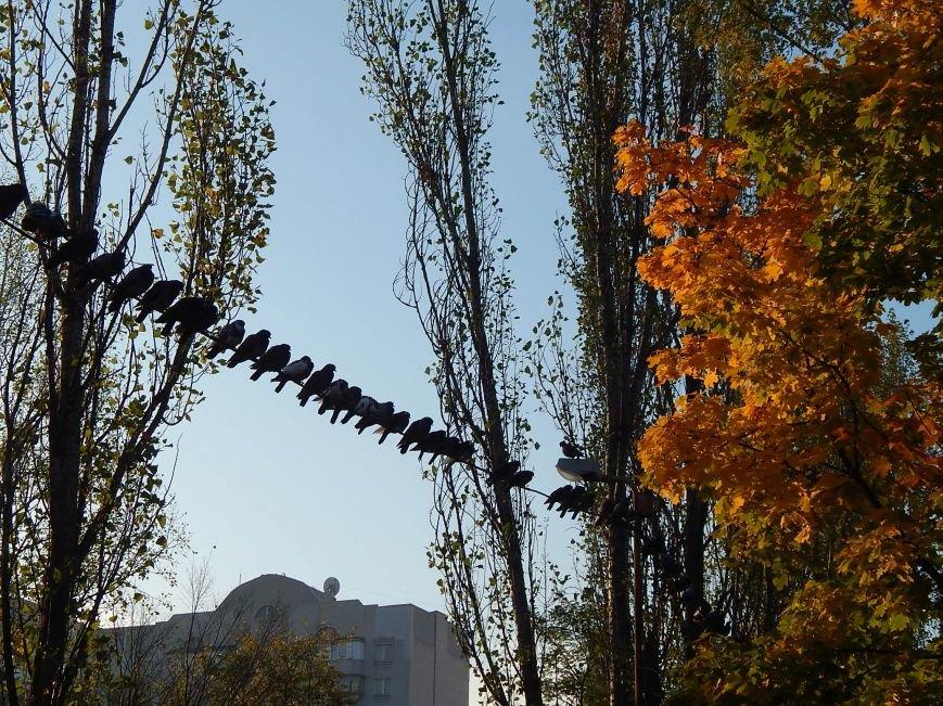 Киевские голуби приобщаются к спорту (ФОТОФАКТ), фото-3