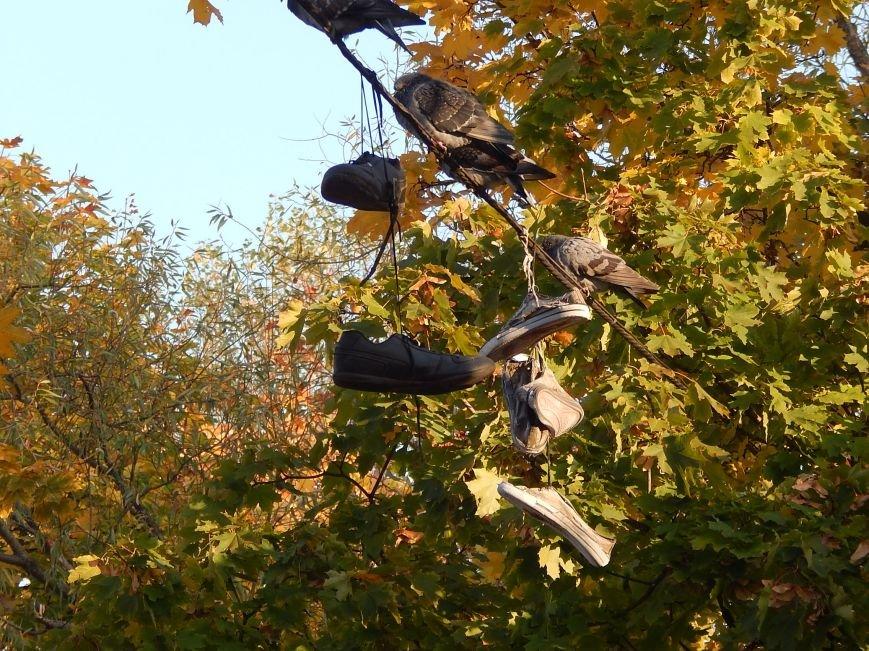Киевские голуби приобщаются к спорту (ФОТОФАКТ), фото-1