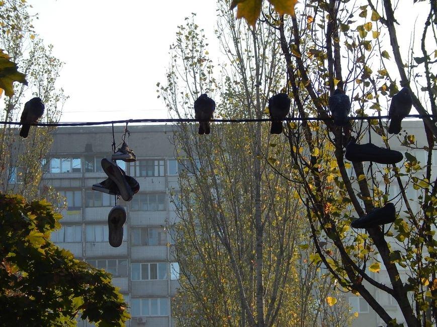 Киевские голуби приобщаются к спорту (ФОТОФАКТ), фото-7