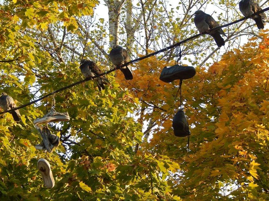 Киевские голуби приобщаются к спорту (ФОТОФАКТ), фото-2