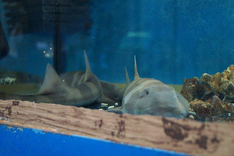В УСК Светланы Хоркиной проходит выставка экзотических животных, фото-1