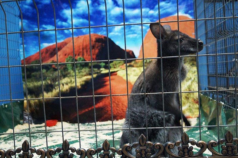 В УСК Светланы Хоркиной проходит выставка экзотических животных, фото-2
