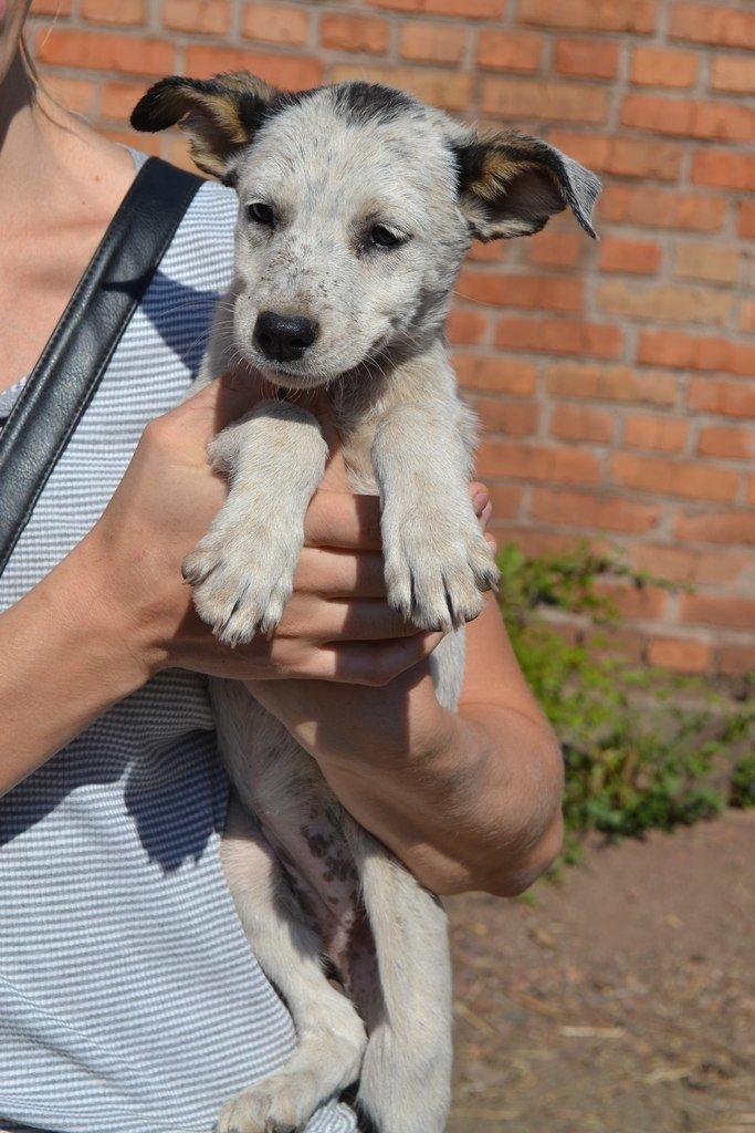 Во Всемирный день защиты животных криворожские волонтеры спасали жизнь бездомным щенкам, фото-5