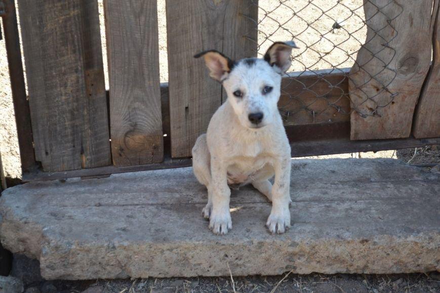 Во Всемирный день защиты животных криворожские волонтеры спасали жизнь бездомным щенкам, фото-1