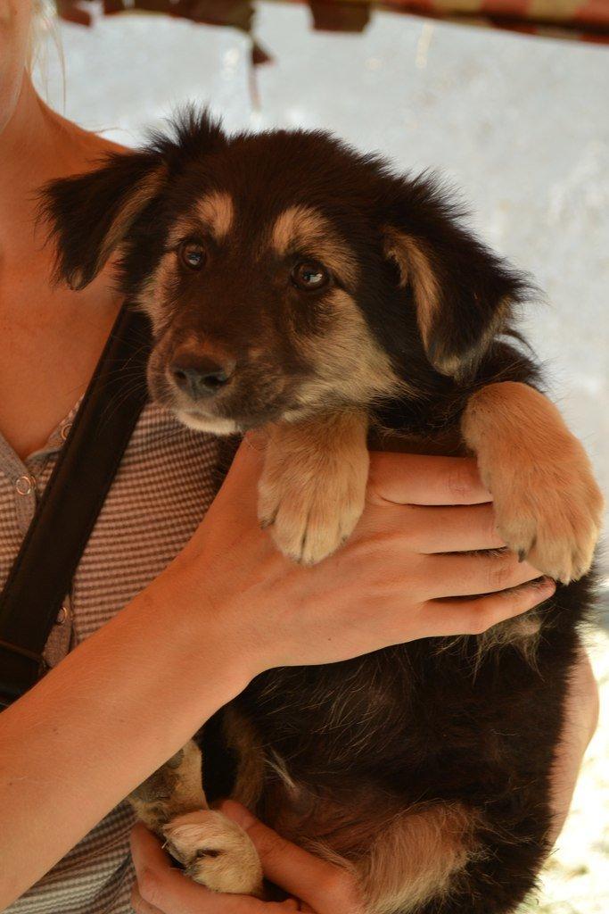 Во Всемирный день защиты животных криворожские волонтеры спасали жизнь бездомным щенкам, фото-4