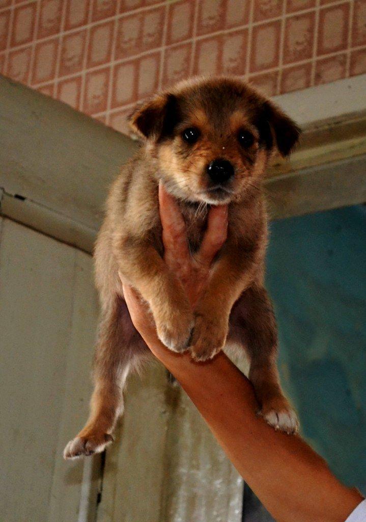 Во Всемирный день защиты животных криворожские волонтеры спасали жизнь бездомным щенкам, фото-3