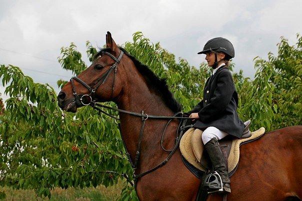 Юные всадницы Ялтинской Федерации конного спорта успешно дебютировали на Первенстве КСК «Спартак», фото-3