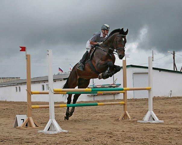 Юные всадницы Ялтинской Федерации конного спорта успешно дебютировали на Первенстве КСК «Спартак», фото-4