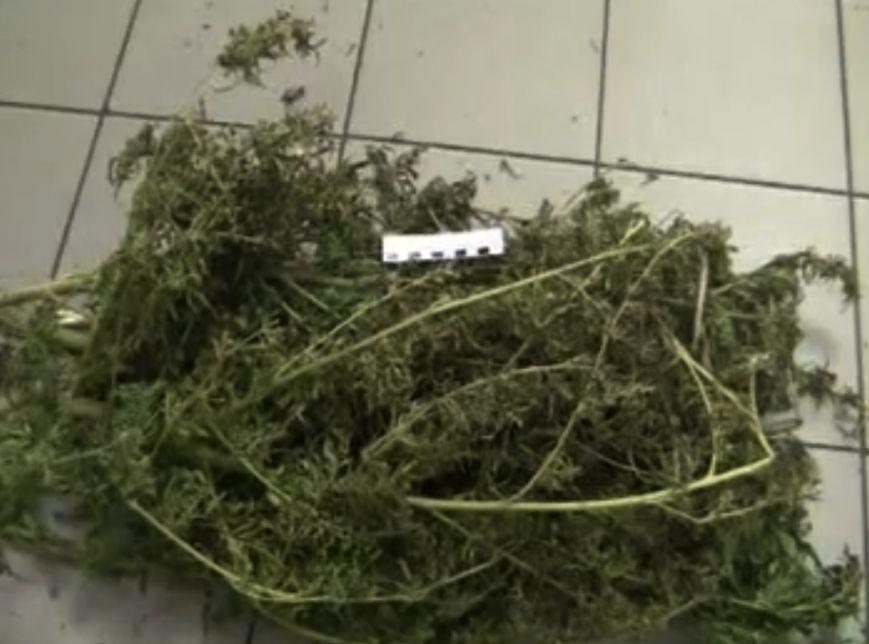 Последние новости конопли в россии чипсы с марихуаной