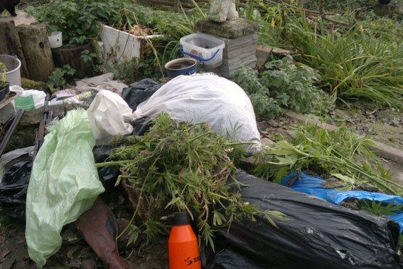 Зброя та наркотики: на Львівщині «винахідник» вирощував марихуану поруч із помідорами (ФОТОРЕПОРТАЖ), фото-14