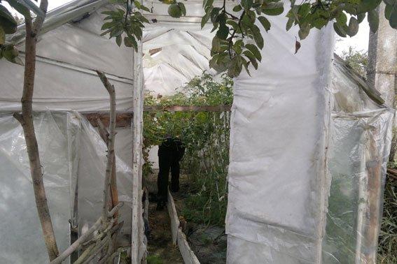 Зброя та наркотики: на Львівщині «винахідник» вирощував марихуану поруч із помідорами (ФОТОРЕПОРТАЖ), фото-13