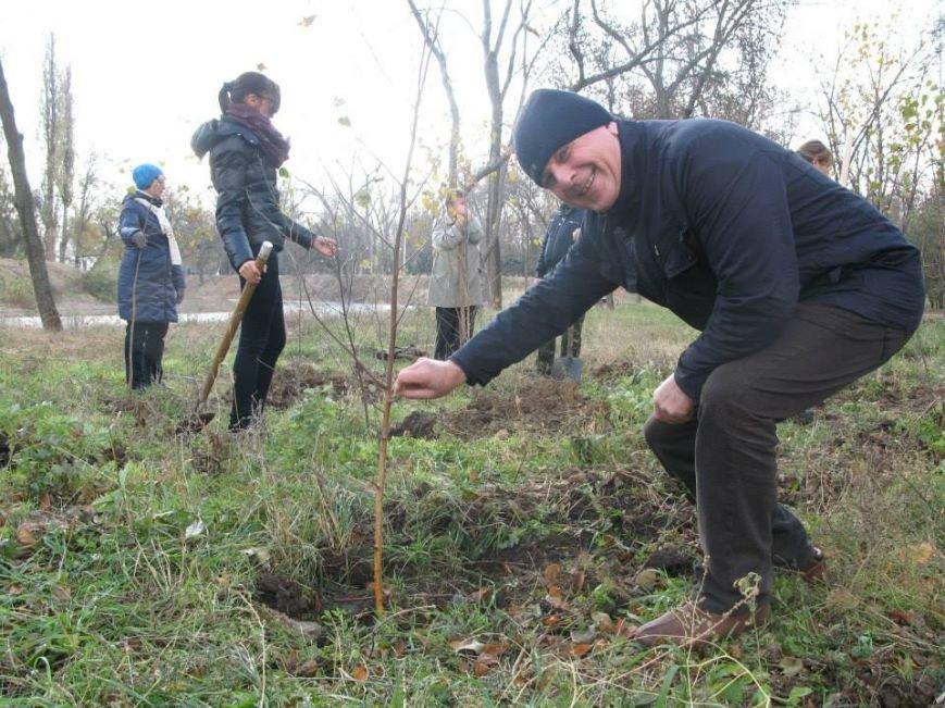 На центральной аллее парка «Правды» криворожане высадили 400 саженцев берез (ФОТО, ВИДЕО), фото-6