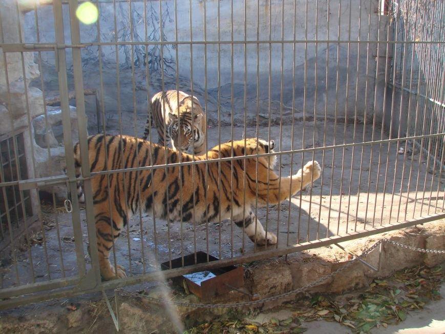 В Запорожской области можно будет провести ночь с тиграми (ФОТО), фото-1