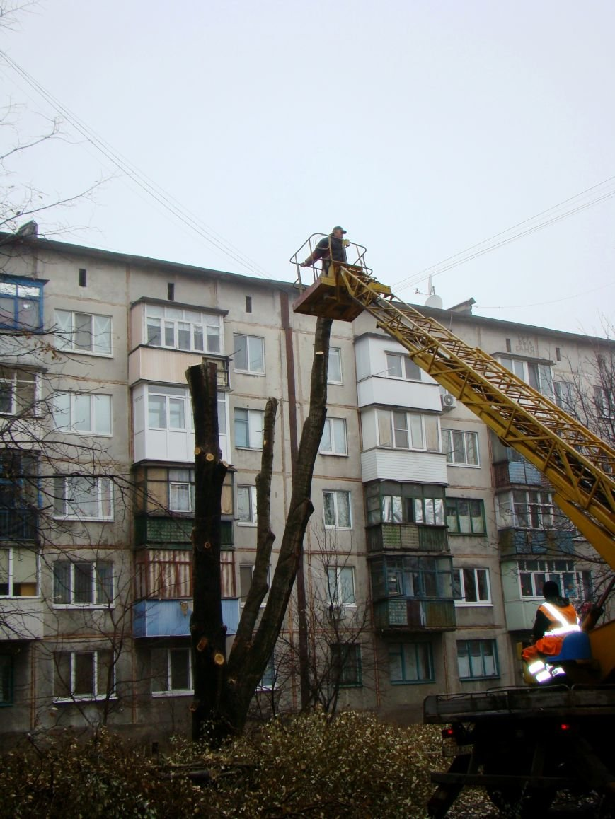 Благодаря Красноармейскому депутату Олегу Подлесному аварийных деревьев в поселке динзавода стало меньше, фото-5