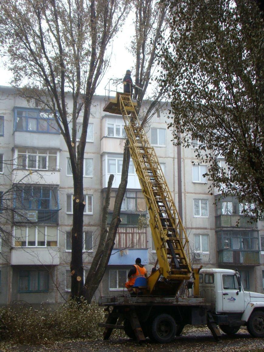 Благодаря Красноармейскому депутату Олегу Подлесному аварийных деревьев в поселке динзавода стало меньше, фото-4