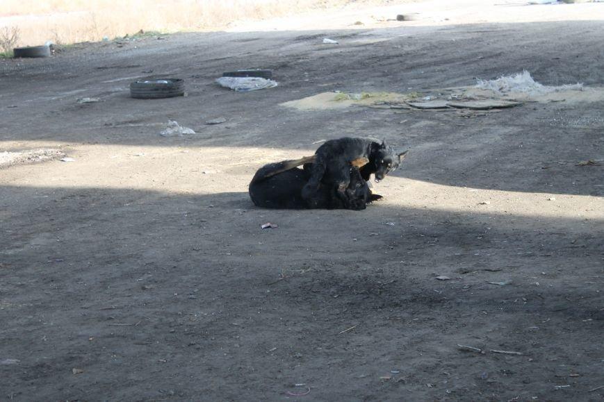 Из Красноармейска на передовую: журналисты 06239 с волонтерами из «ДПР» посетили блокпост в Песках, фото-48