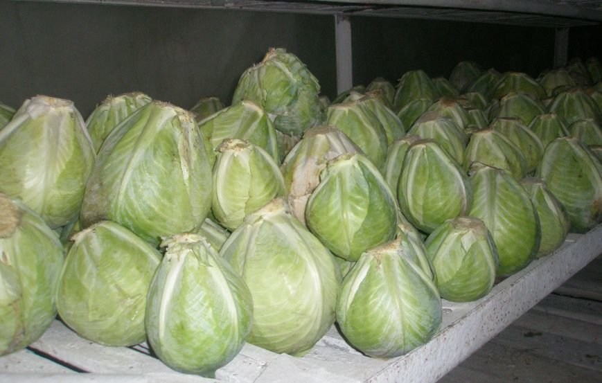 Мариупольские осужденные запаслись капустой и консервами (ФОТО), фото-2