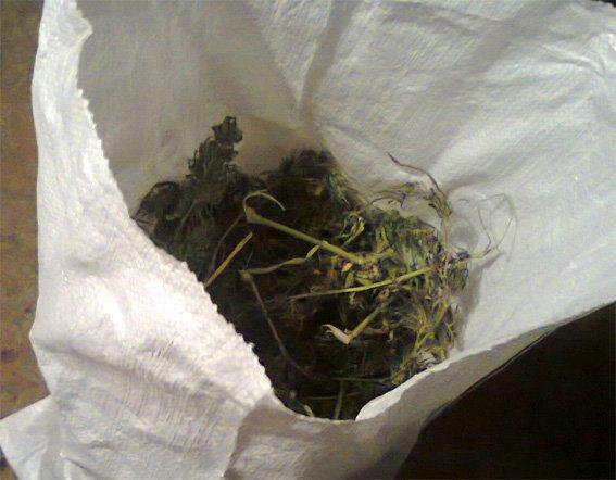 У жителя Кировоградской области изъято почти полтора килограмма конопли, фото-2