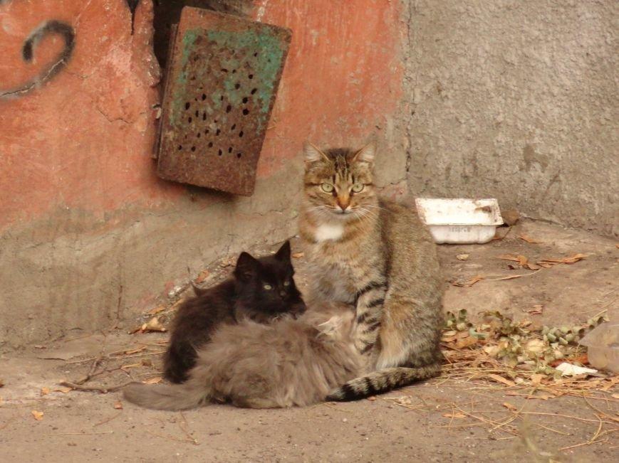 Фотопятница: «Четырехлапые жители Мариуполя», фото-36