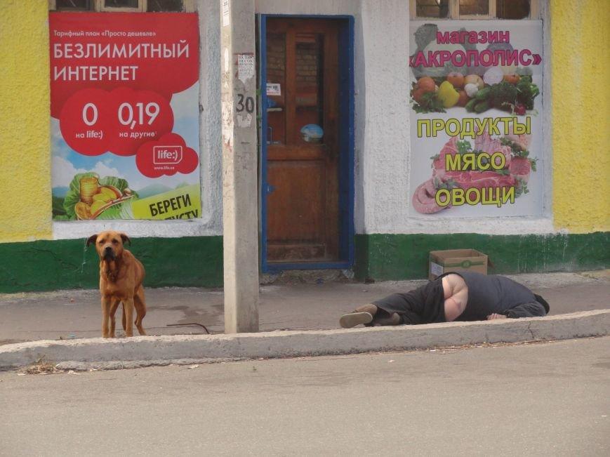 Фотопятница: «Четырехлапые жители Мариуполя», фото-2