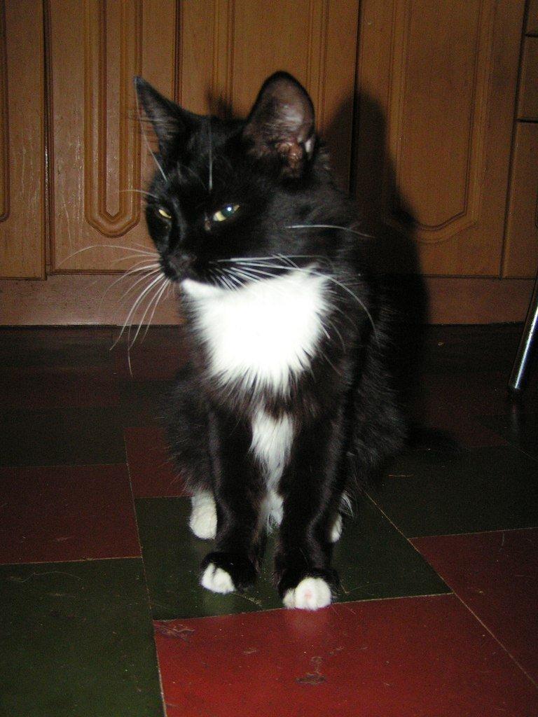Кошка из запорожского блок-поста ищет дом (ФОТО), фото-3